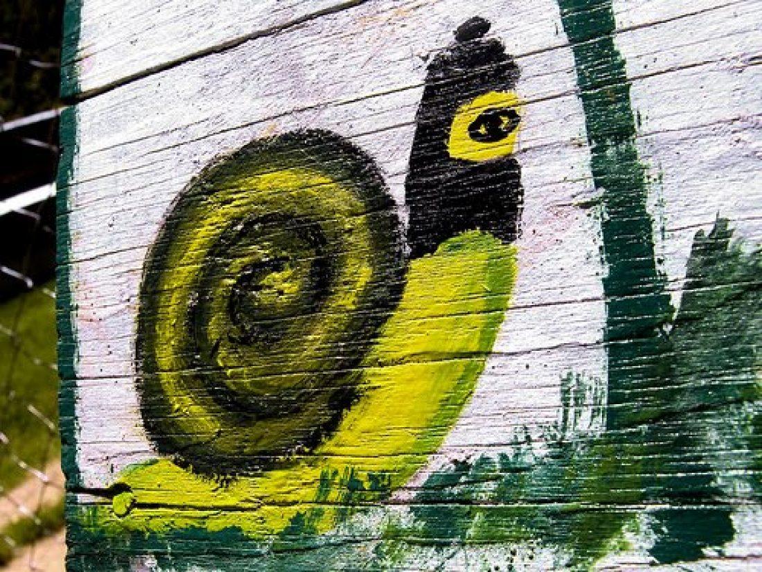 CGT celebra 9 años de democracia radical de las JBG zapatistas
